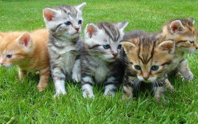 Een kitten in huis