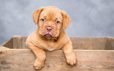Een pup in huis