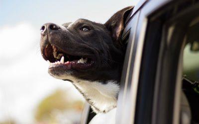 Reisziekte bij honden