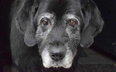 Is uw huisdier een senior?