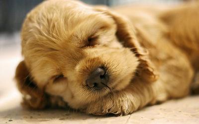 Geboorteproces hond