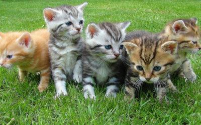 Geboorteproces kat