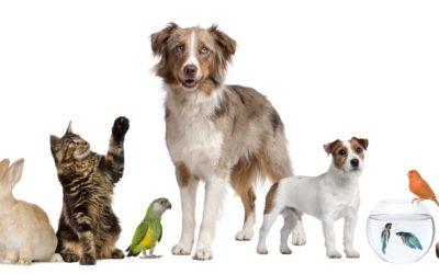 Je huisdier verzekeren: ja of nee?