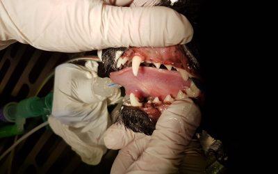 Tandheelkundige behandelingen