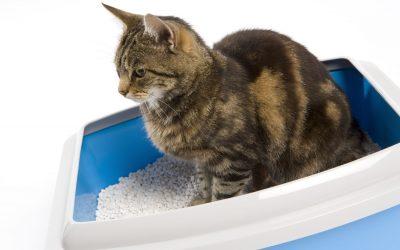 NIEUW! Kattenbakvulling met gezondheidsindicator